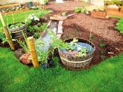 Пермакультурная организация садового участка